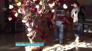De Bairro em Bairro – Ep. 42: Árvore da Felicidade no bairro Brasil