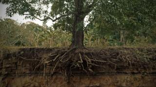 Toda árvore um dia vai ser raiz