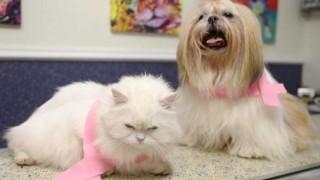 Outubro Rosa Pet alerta para o câncer de mama em animais