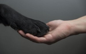 cachorro-dando-pata