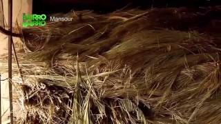 De Bairro em Bairro – Ep. 10: Mansour e Martins
