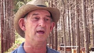 De Bairro em Bairro – Ep. 65: Apiário do Ricardo Hensing, em Miraporanga